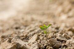 Árbol joven en suelo seco imagenes de archivo