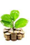 Árbol joven que crece de monedas imagenes de archivo