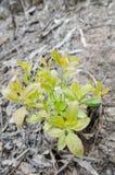Árbol joven que crece de suelo Fotografía de archivo