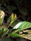 Árbol joven verde grueso imágenes de archivo libres de regalías