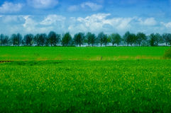 Árbol-línea Fotos de archivo
