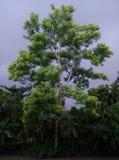 Árbol lindo Fotos de archivo libres de regalías