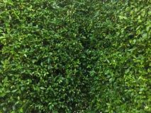 Árbol a lo largo del cierre Foto de archivo