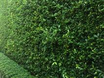 Árbol a lo largo del cierre Fotografía de archivo