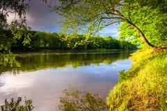 Árbol a lo largo del río Delaware en el agua Gap Rec nacional de Delaware Imagen de archivo libre de regalías