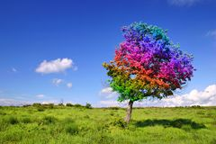 Árbol mágico Imágenes de archivo libres de regalías