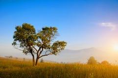 Árbol mágico en la madrugada fotografía de archivo