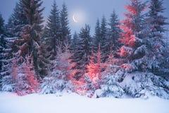 Árbol mágico en la Navidad Fotos de archivo libres de regalías