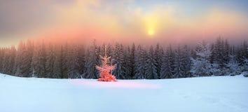 Árbol mágico en la Navidad Imagen de archivo libre de regalías