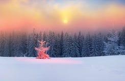 Árbol mágico en la Navidad Foto de archivo libre de regalías