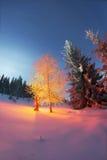 Árbol mágico en la Navidad Fotos de archivo