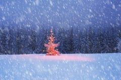 Árbol mágico en la Navidad Imagen de archivo