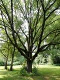 Árbol mágico en parque Fotos de archivo libres de regalías