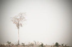 Árbol mínimo en la colina Fotos de archivo