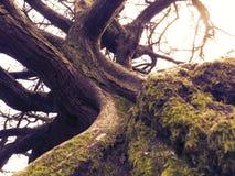 Árbol místico Fotos de archivo