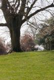 Árbol maduro con un banco al lado de él fotos de archivo