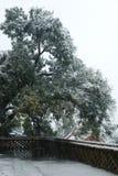Árbol magnífico en nieve Imágenes de archivo libres de regalías