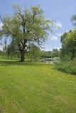 Árbol majestuoso al lado de un río Fotografía de archivo