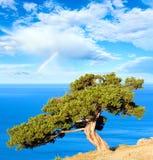 Árbol, mar y arco iris del enebro Fotos de archivo