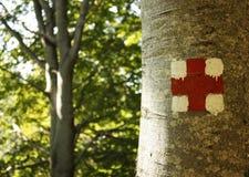Árbol marcado en el bosque fotos de archivo libres de regalías