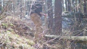 Árbol mayor del corte del leñador con el hacha en el bosque almacen de video