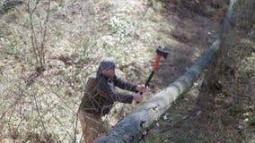 Árbol mayor del corte del leñador con el hacha en el bosque metrajes