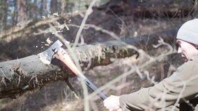 Árbol mayor del corte del leñador con el hacha en el bosque almacen de metraje de vídeo