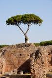 Árbol mediterráneo Imágenes de archivo libres de regalías