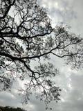 Árbol melancólico fotos de archivo libres de regalías