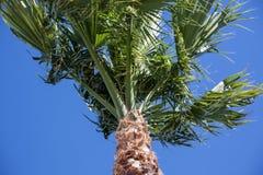Árbol-mirada de la palma para arriba Imagen de archivo libre de regalías