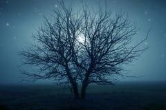 Árbol misterioso Fotos de archivo libres de regalías
