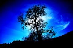 Árbol misterioso Imagen de archivo