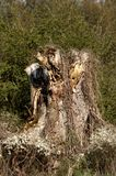 Árbol moddering viejo imagenes de archivo