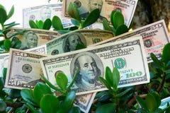 Árbol monetario Fotos de archivo libres de regalías