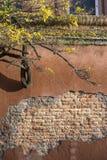 Árbol montado en pared imagen de archivo