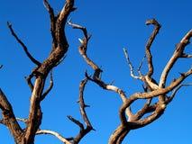Árbol muerto 1 Fotos de archivo