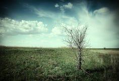 Árbol muerto Fotografía de archivo libre de regalías