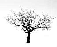 Árbol muerto Imágenes de archivo libres de regalías