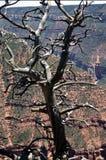Árbol muerto Foto de archivo libre de regalías