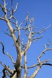 Árbol muerto Foto de archivo
