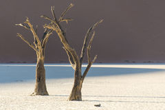 Árbol muerto 4 Imagen de archivo libre de regalías