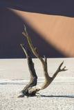 Árbol muerto 10 Fotografía de archivo