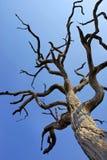 Árbol muerto Fotografía de archivo