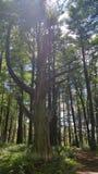 Árbol muerto Fotos de archivo