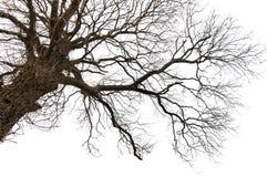 Árbol muerto aislado Imágenes de archivo libres de regalías
