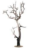 Árbol muerto aislado en blanco Imagen de archivo