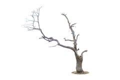 Árbol muerto aislado en blanco Fotografía de archivo libre de regalías