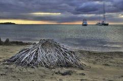 Árbol muerto con las raíces expuestas en una playa, Hawaii Foto de archivo