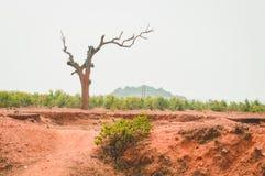 Árbol muerto con las ramas y sin las hojas Árbol de hoja caduca sin el cielo de las hojas en el fondo rama de árbol en el otoño d foto de archivo libre de regalías