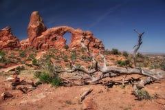 Árbol muerto de arcos Fotografía de archivo libre de regalías